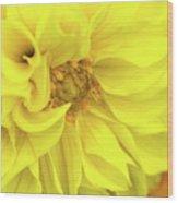 Closeup Of A Colourful Flower Wood Print