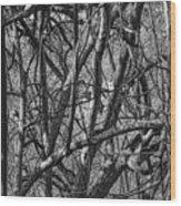 Msc Wood Print