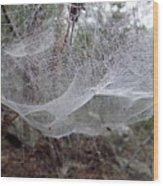 Australia - Concave Spider Web Wood Print