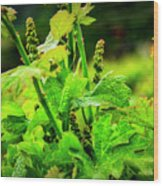 2629- Comsrock Winery Wood Print