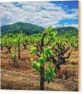 2638- Coffaro Vineyard Wood Print