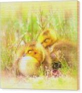 2736 - Canada Goose Wood Print