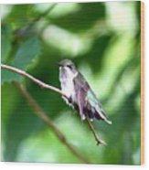2757 -  Hummingbird Wood Print