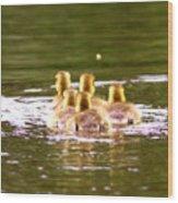 2767 - Canada Goose Wood Print