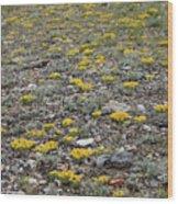 2d07512 Prairie Zinnia In Lost River Range Wood Print