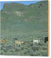 2da5946-dc Cattle On Steens Mountain Wood Print