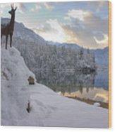 Alpine Winter Reflections Wood Print