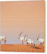 Arabian Oryx Wood Print