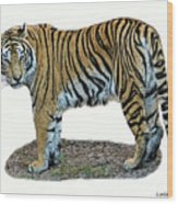Asian Tiger Wood Print