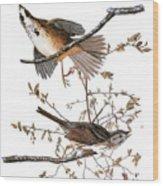 Audubon: Sparrow, (1827-38) Wood Print