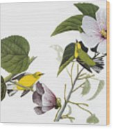 Audubon Warbler Wood Print