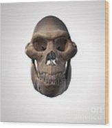 Australopithecus Skull Wood Print