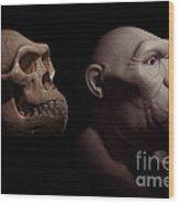 Australopithecus With Skull Wood Print