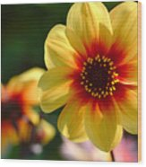 Autumn Flowers Wood Print