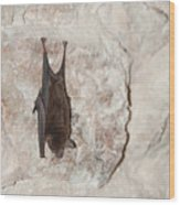 Bats Inside The Pyramid At Grupo Nohoch Mul At The Coba Ruins  Wood Print