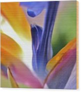 3 Bird Of Paradise Macro Wood Print