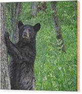 Black Bear Yearling Wood Print