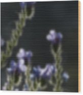Blurred Seasonal Flower With Dark Background Wood Print