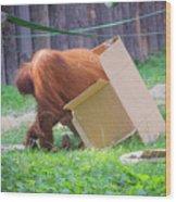 Budapest Zoo Wood Print