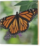Butterfly Wood Print