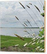 Cape Cod Salt Pond Wood Print