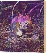 Cat Kitten Mieze Red Mackerel Tabby  Wood Print