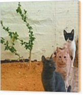3 Cats Wood Print