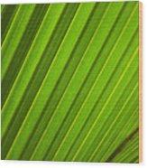Coconut Palm Leaf Wood Print