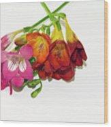 Colorful Freesia Wood Print
