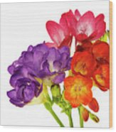 Colorful Freesias Wood Print