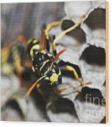 Common Wasp Vespula Vulgaris Wood Print