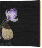 Crocus Flower In Quartz Geode Wood Print