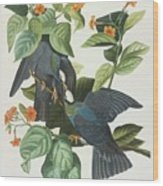 Crowned Pigeon Wood Print