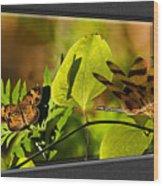 3-d Dragonfly Wood Print