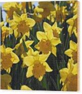 Daffodils In The Sunshine Wood Print