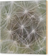 Dandelion Close-up. Wood Print