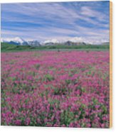 Denali National Park Wood Print