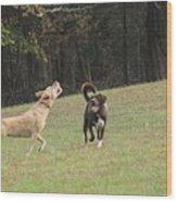 Dog Playing Wood Print