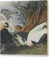 Eider Duck Wood Print