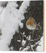 European Robin Erithacus Rubecula Wood Print