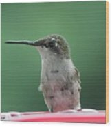 Female Ruby-throated Hummingbird Wood Print