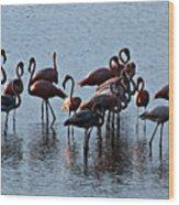 Flamingo Family Wood Print