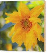 Flowering Garden.  Wood Print