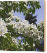 Flowering Pear Branch In The Garden Wood Print