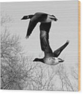 Flying Together Wood Print