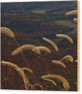 Foxtails Wood Print