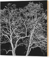 Ghost Trees Wood Print