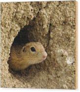 Goround Squirrel  Wood Print
