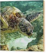 Green Sea Turtle Wood Print