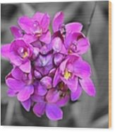 Fuchsia Ground Orchid Wood Print